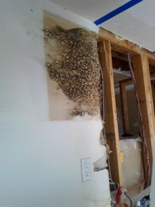 Mold Infestation Found In Residential Property