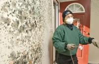 mold removal San Antonio TX