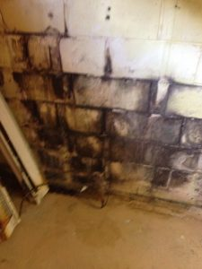 Water Damage Mold Grwoth In Basement Corner