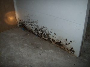 Water Damage Mold Growth On Wall
